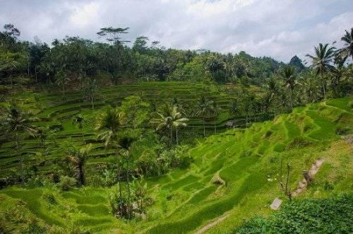 巴厘岛的德戈拉朗梯田